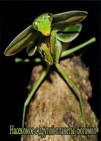 Насекомое с другой планеты. Богомол (2012) / Insect from another planet. Mantis